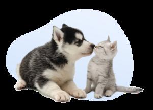 conte:it _ cane e gatto